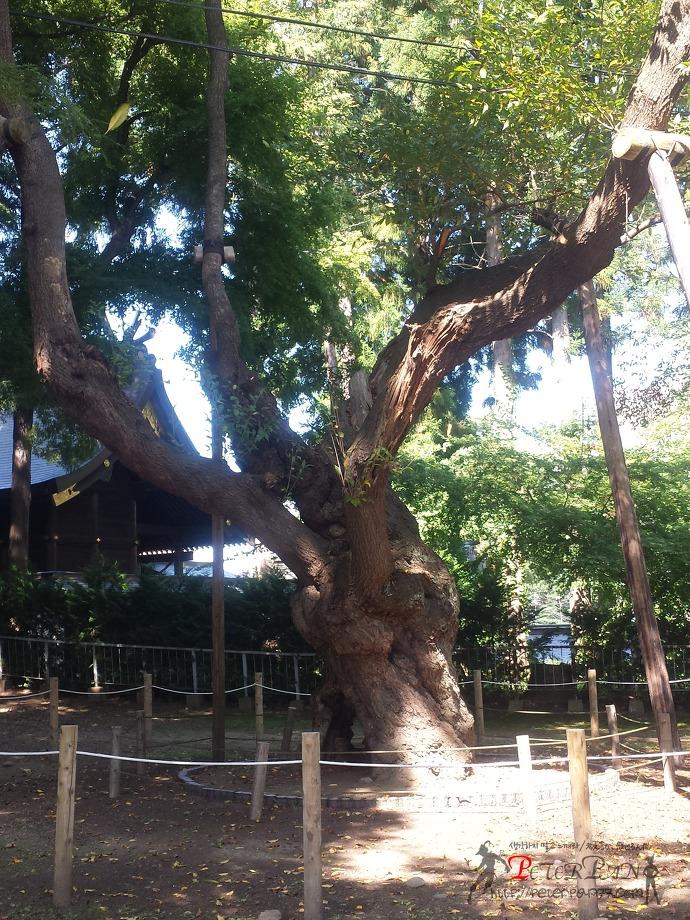 모리오카성 유적공원 盛岡城跡公園 岩手公園