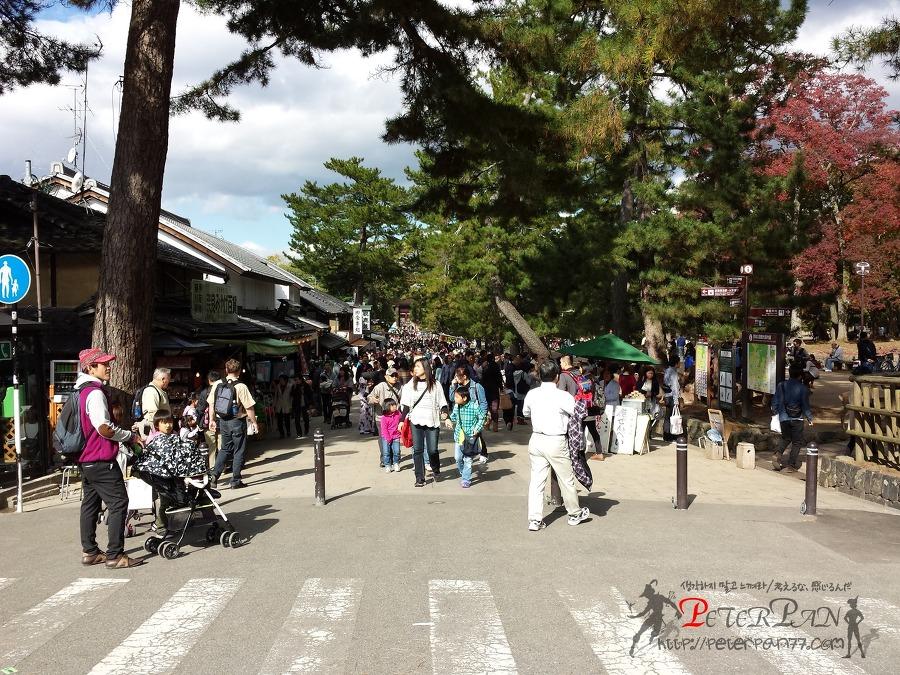나라 토다이지 奈良 東大寺